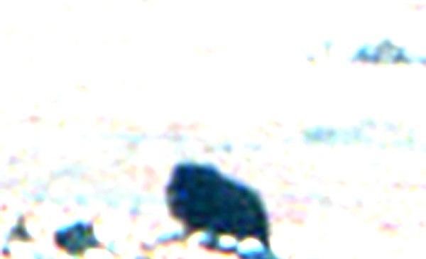 RDjv70coaqM.jpg